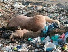 Plastic bags effects on the environment - The Great Pacific Garbage Patch Hermetica Health
