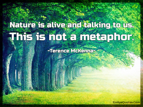 Nature-is-alive-and-talking-to-us.-This-is-not-a-metaphor.-500x375